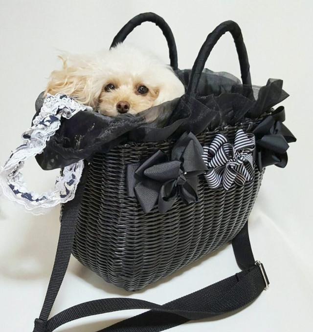 """""""かわいい""""デザインのドッグキャリーバッグで愛犬と愛犬とお出掛けしよう!"""